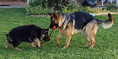 Zena and Zeus