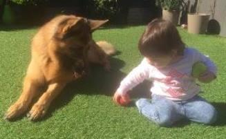 jock and friend pets page