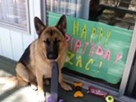 Zac birthday pets pg